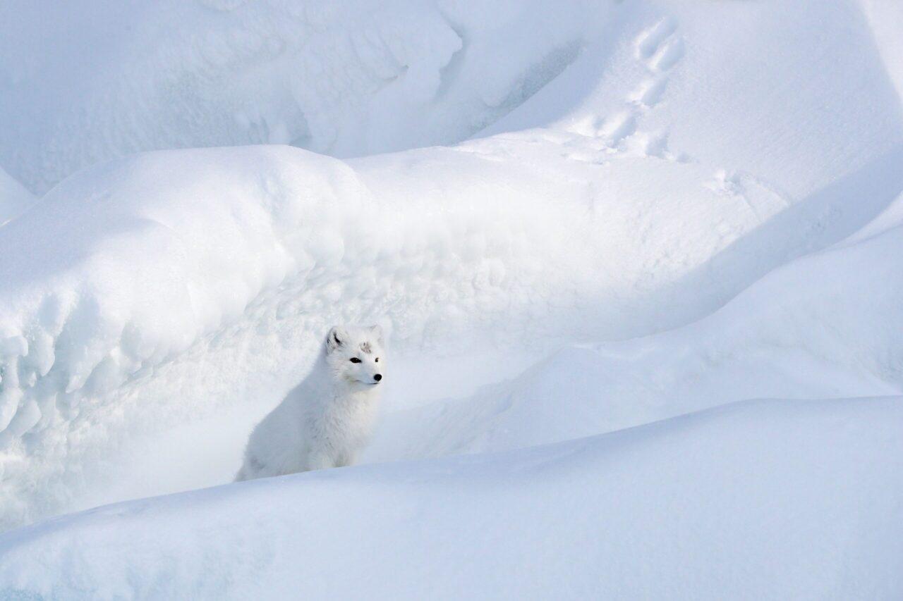 Image for Eesti huvid ja võimalused seoses globaalsete arengutega Arktikas järgneval kümnendil